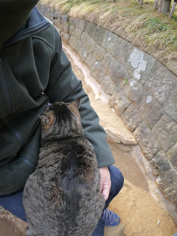 膝に乗ってくっついて寝ているキジトラ猫1