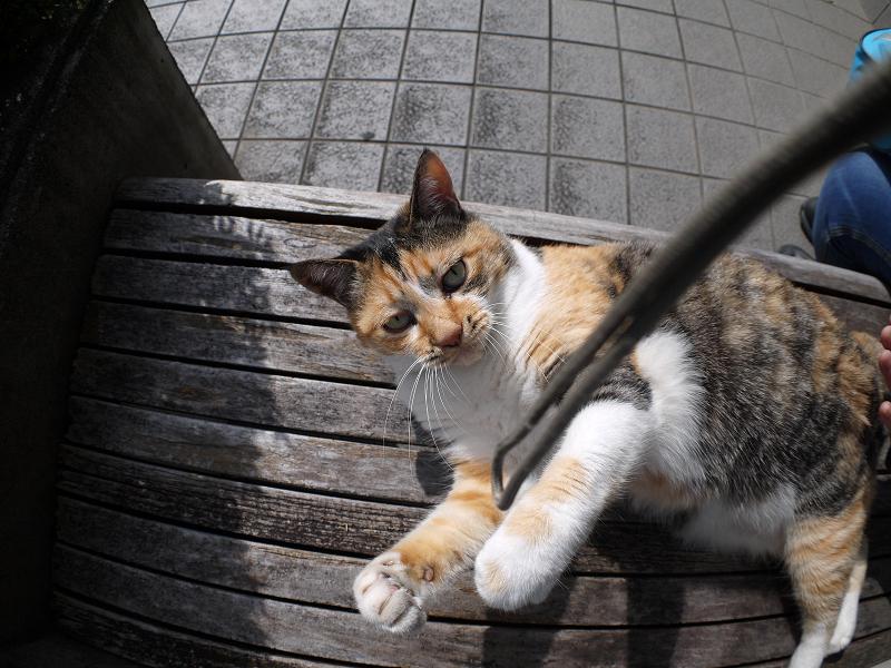 ストラップに夢中な三毛猫2