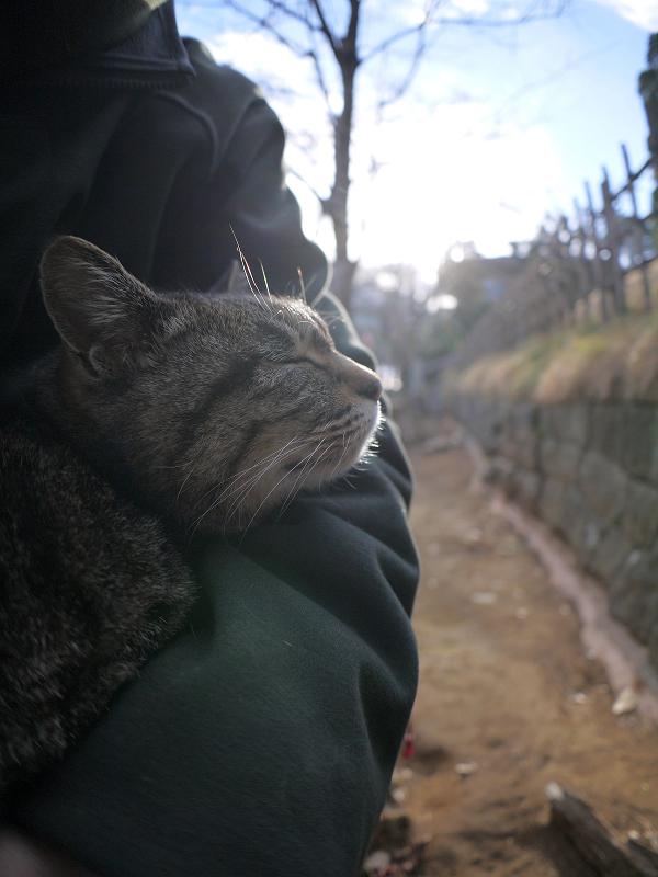 膝に乗ってくっついて寝ているキジトラ猫2