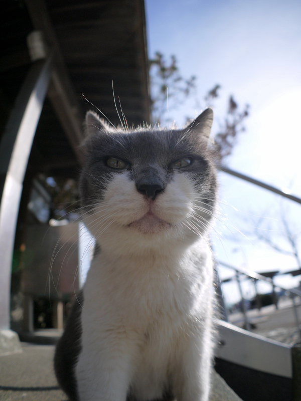 グレー白猫を見上げるカットで1