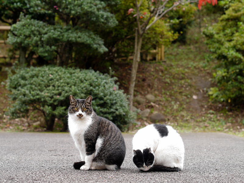 仲良しネコたち1