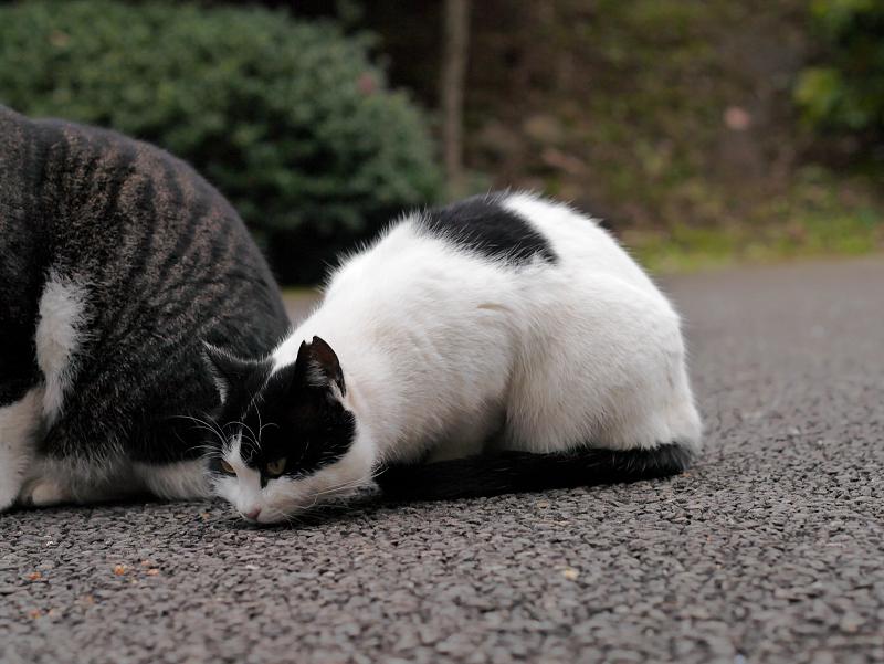 仲良しネコたち3