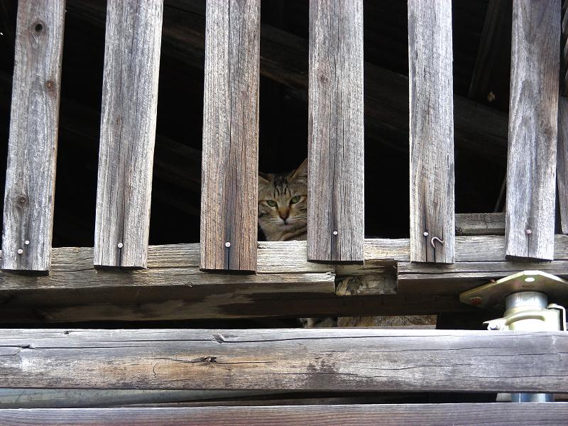 まだまだ見ている猫1