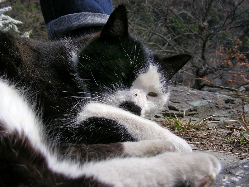 スニーカーに頭を乗せてる黒白猫1