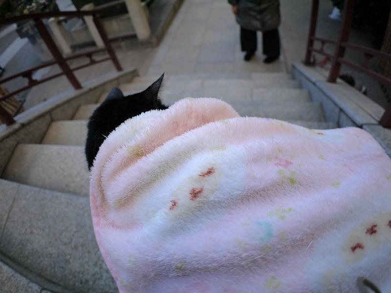 毛布に包まった黒白猫1