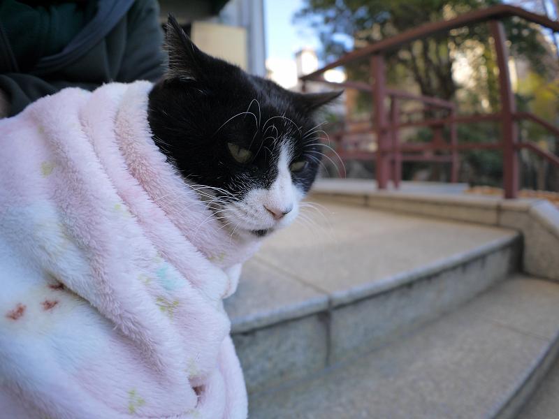 毛布に包まった黒白猫2