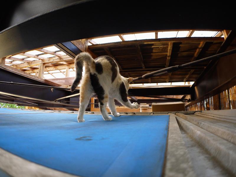 屋根裏の三毛猫1