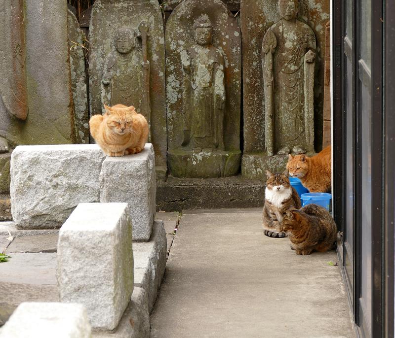 石仏と猫4匹1