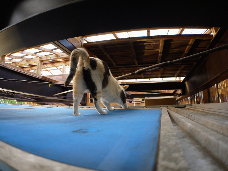 屋根裏の三毛猫2