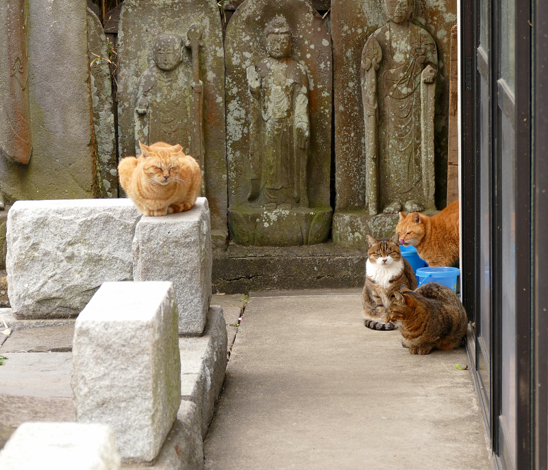 石仏と猫4匹2