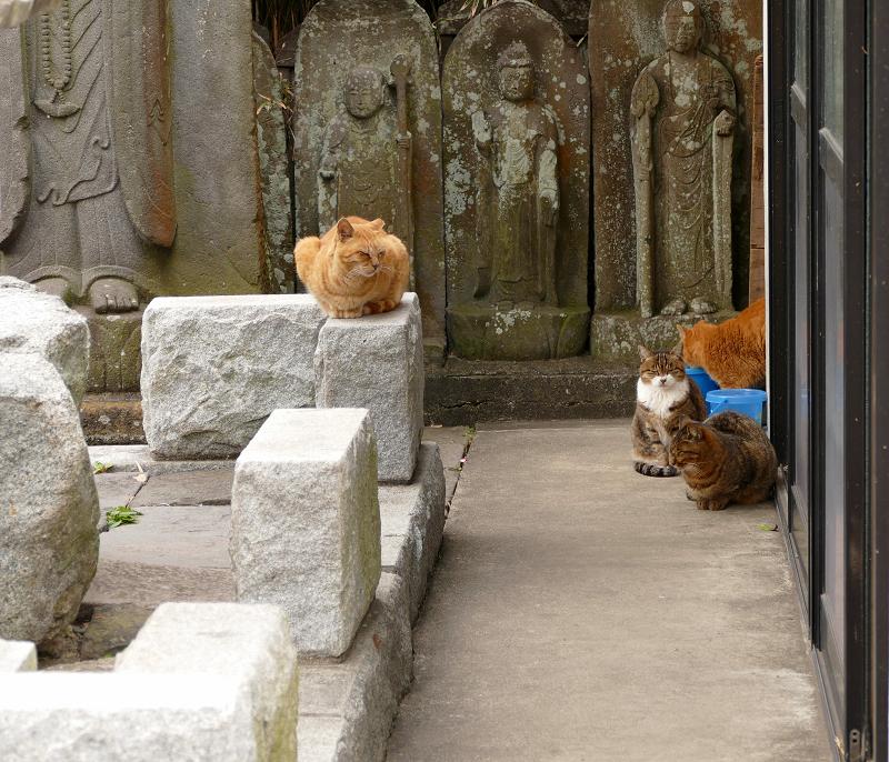 石仏と猫4匹3