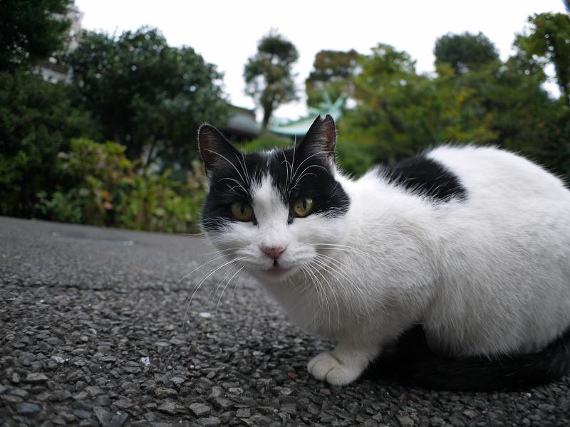 近くまで寄れた白黒猫2