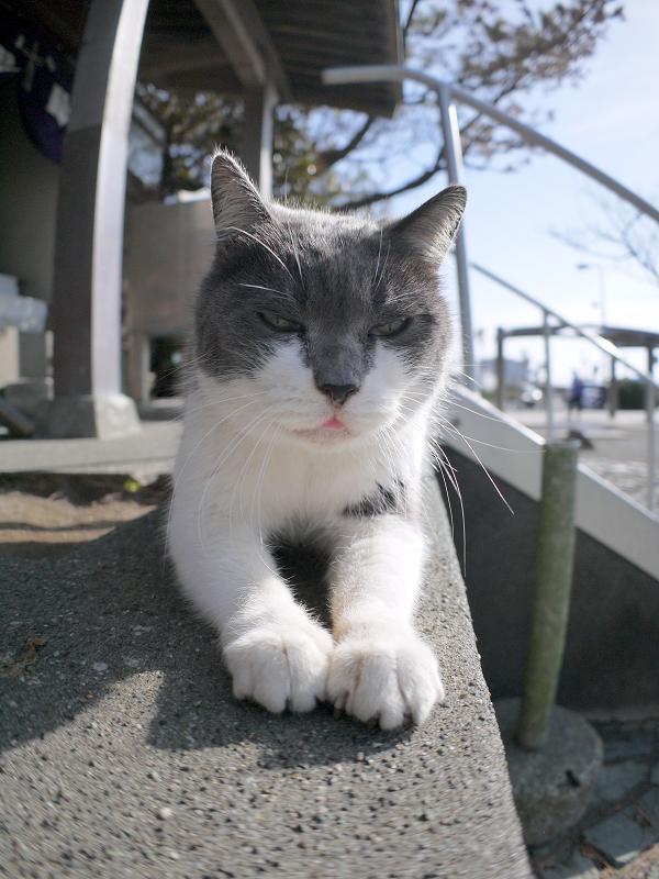 手を入れ替えるグレー白猫3