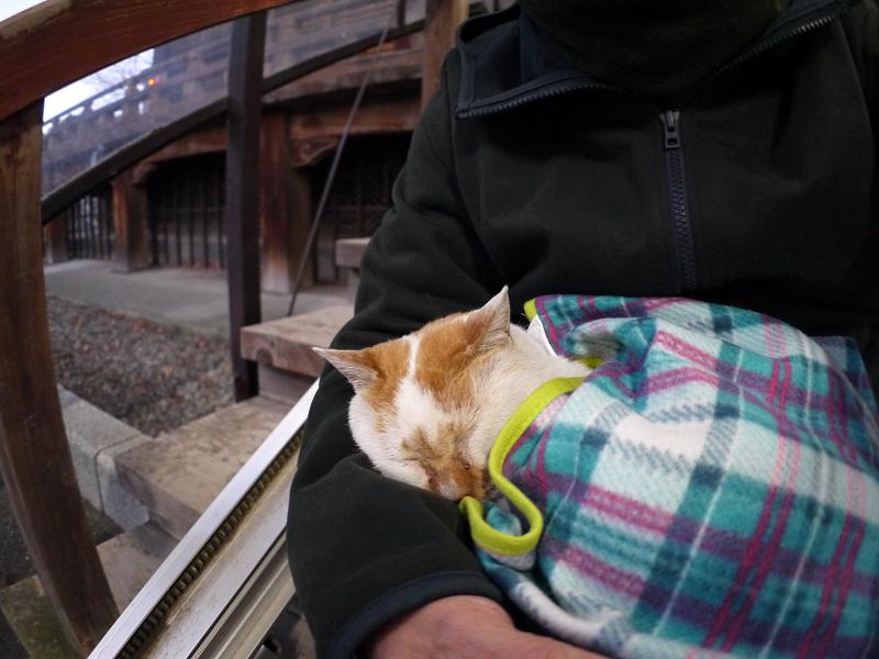 膝の上でフリースに包まって寝てる白茶猫3