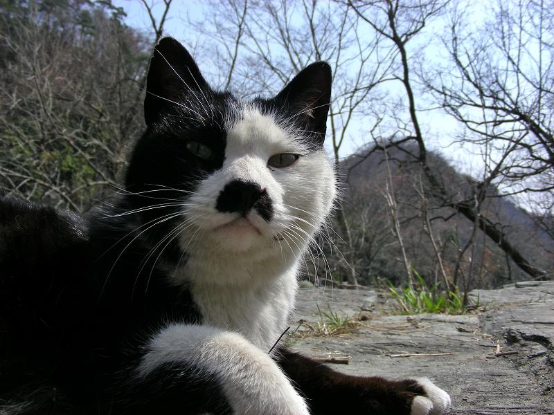 岩場で寛ぐ黒白猫1
