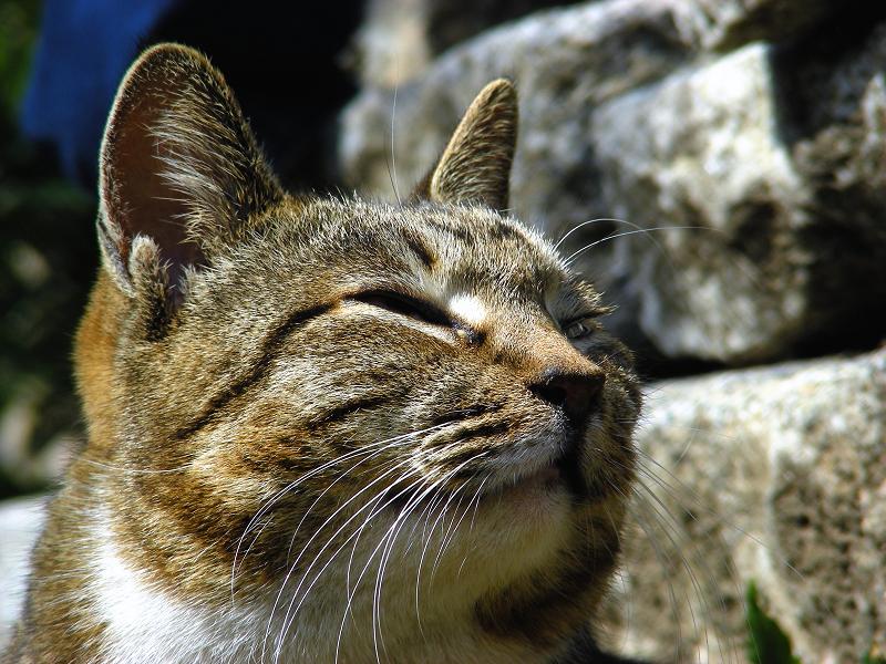 石積みとキジ白猫3