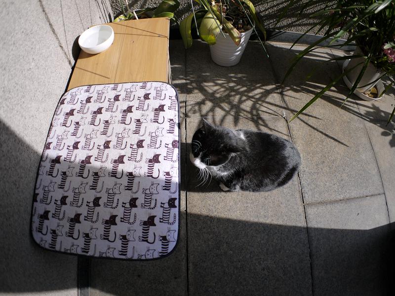 腰掛けベンチと黒白猫1