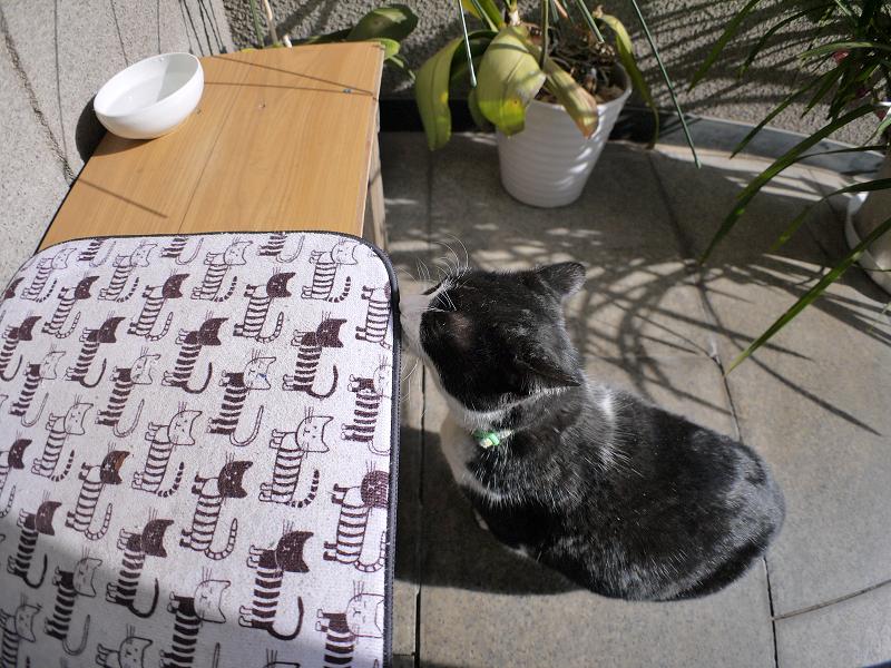 腰掛けベンチと黒白猫2