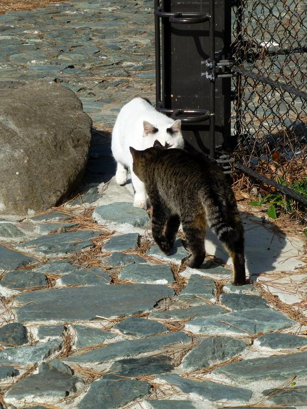 行き交う猫たち1