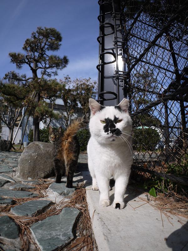 行き交う猫たち2