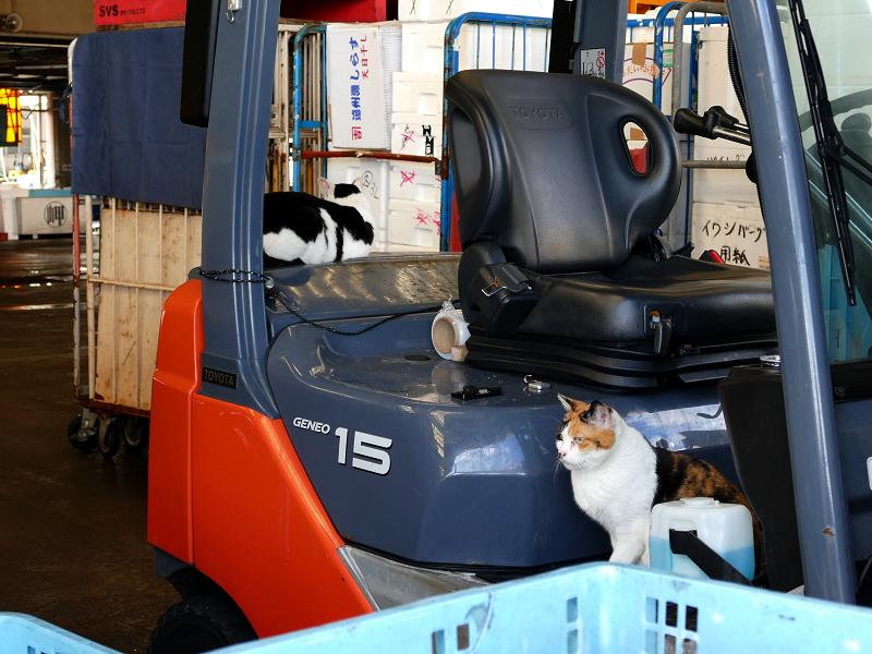 フォークリフトと玉三郎と三毛猫