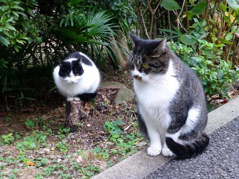 固まり気味の猫2匹