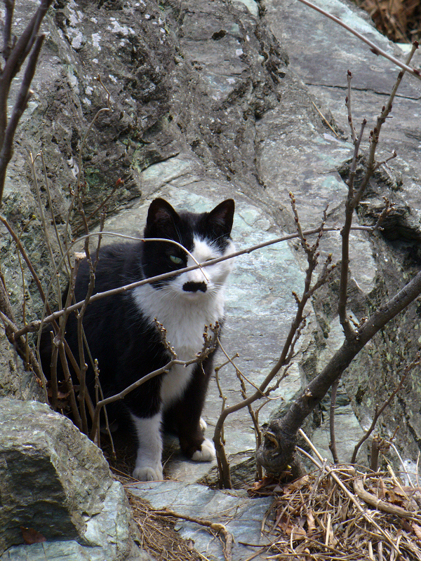 お別れの黒白猫2
