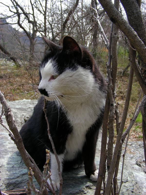 お別れの黒白猫3