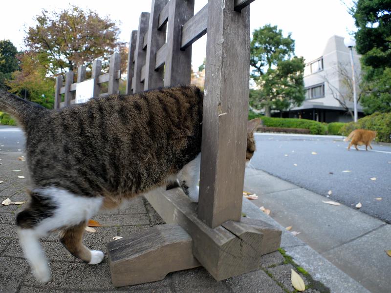 柵を抜けるキジ白猫2