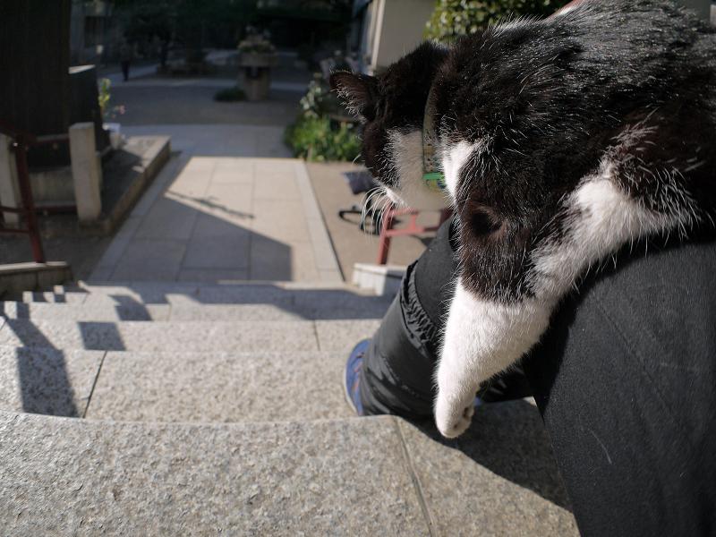 膝で垂れまくる黒白猫2