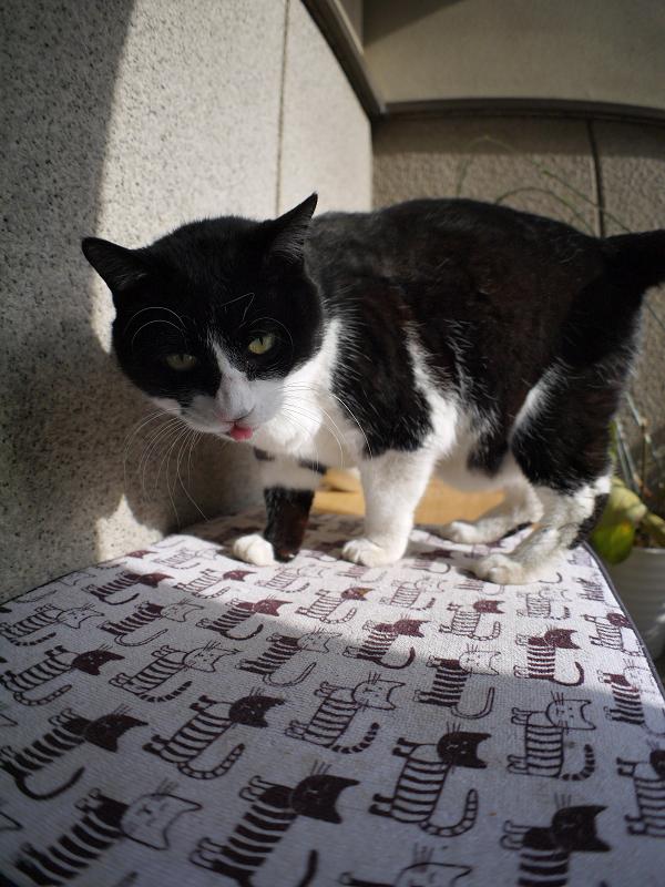 ベンチに飛び乗る黒白猫3
