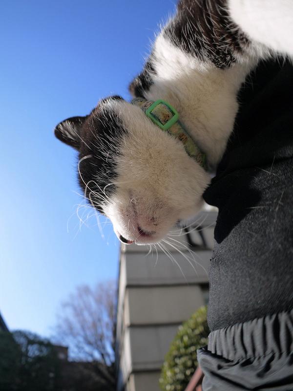 膝で垂れまくる黒白猫3