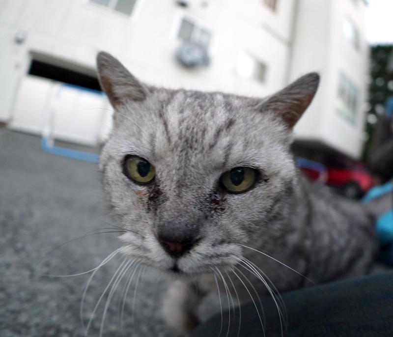 分かり合ったシルバーの猫2