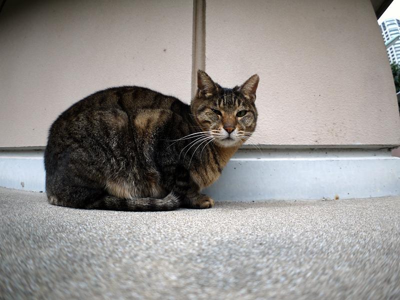 無視を決め込むキジトラ猫1