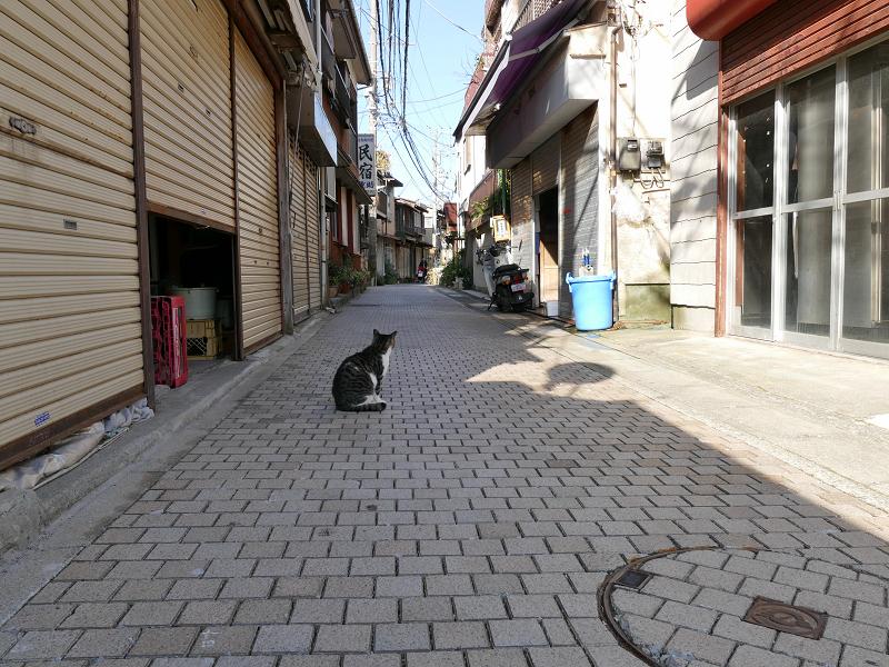 路地のキジ白猫1
