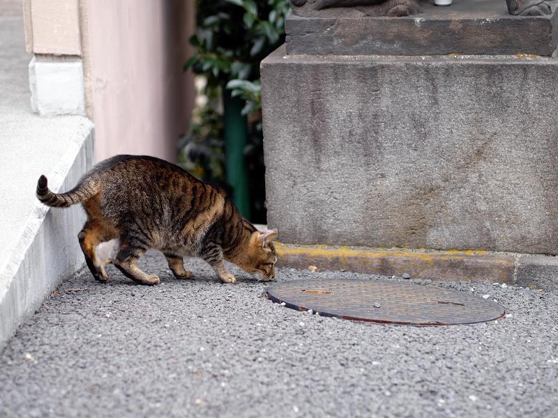 無視を決め込むキジトラ猫2