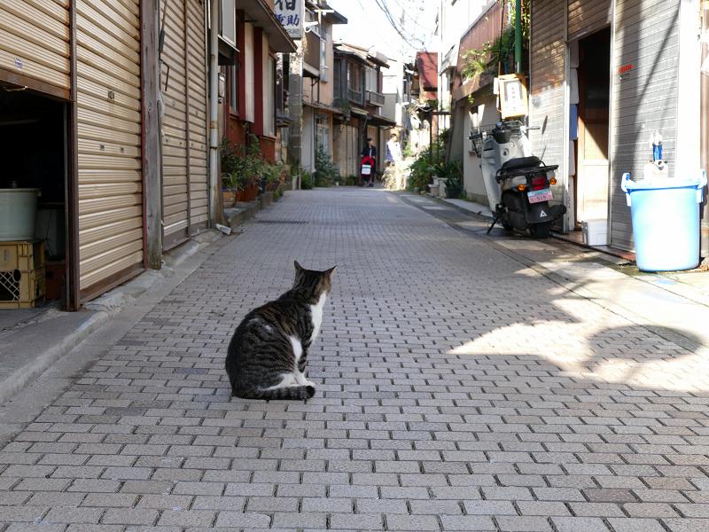 路地のキジ白猫2