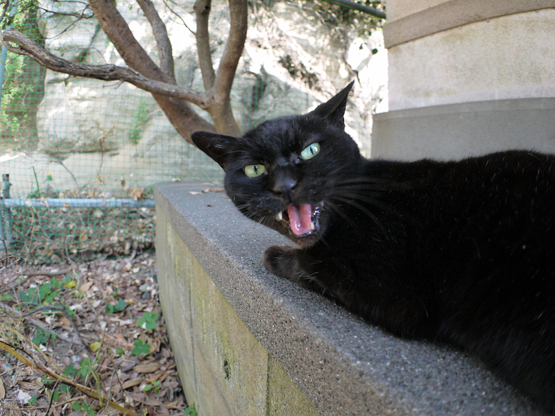 横になってる黒猫3
