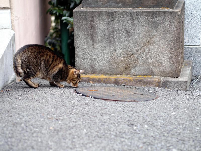 無視を決め込むキジトラ猫3