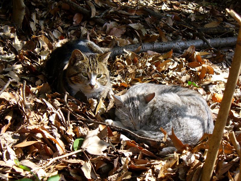 日向の枯れ草ベッドの猫たち1