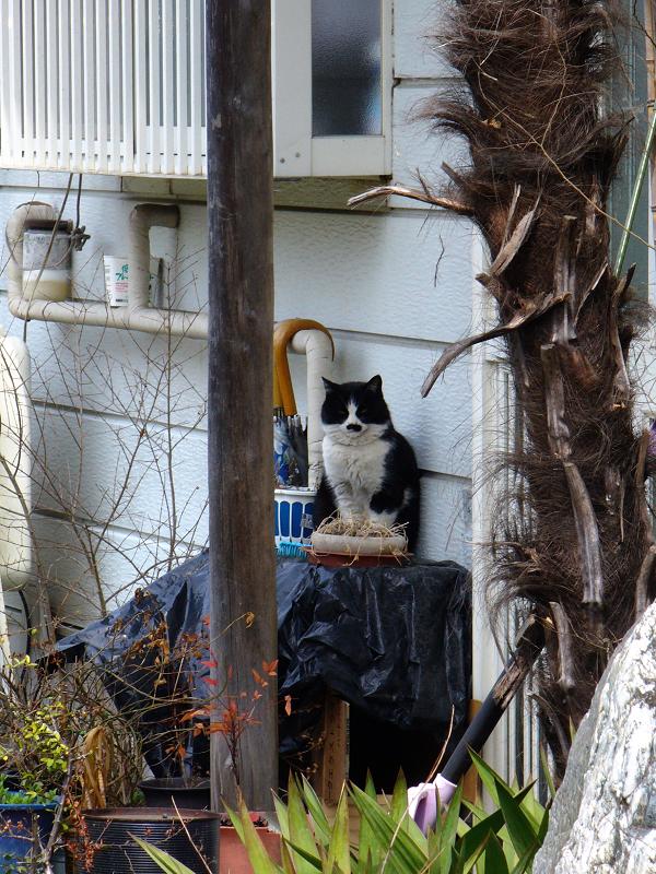 民家前の黒白猫1