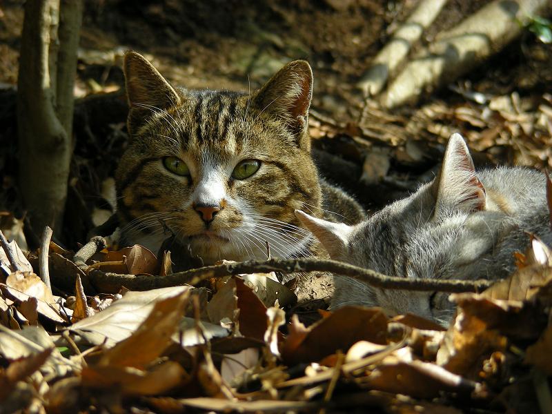 日向の枯れ草ベッドの猫たち2