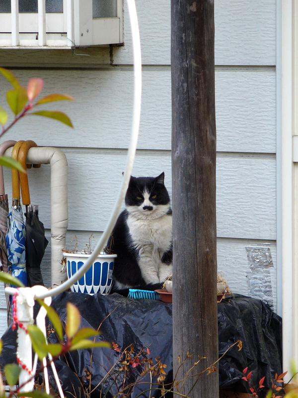 民家前の黒白猫2