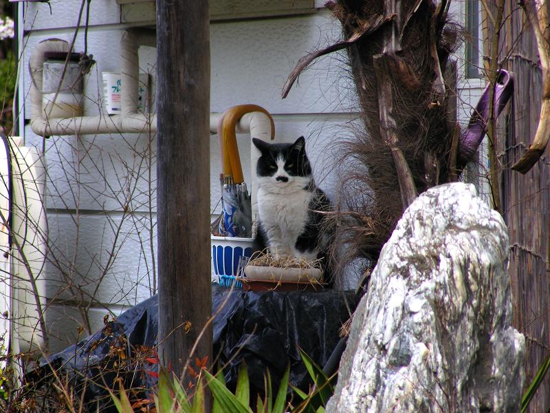 民家前の黒白猫3