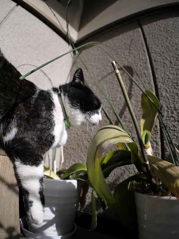 ベンチで垂れる黒白猫1