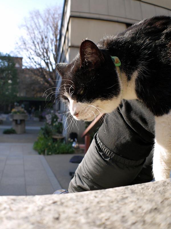 凄い表情で垂れてる黒白猫1