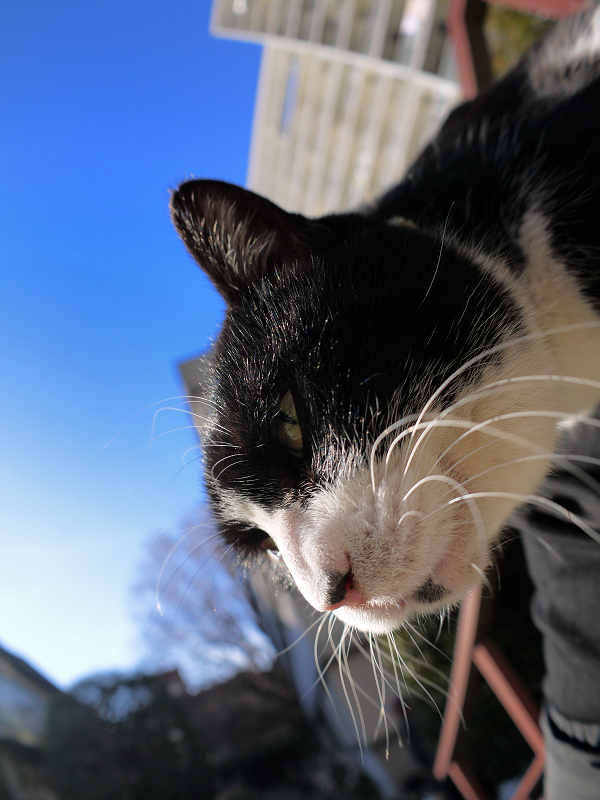 凄い表情で垂れてる黒白猫2