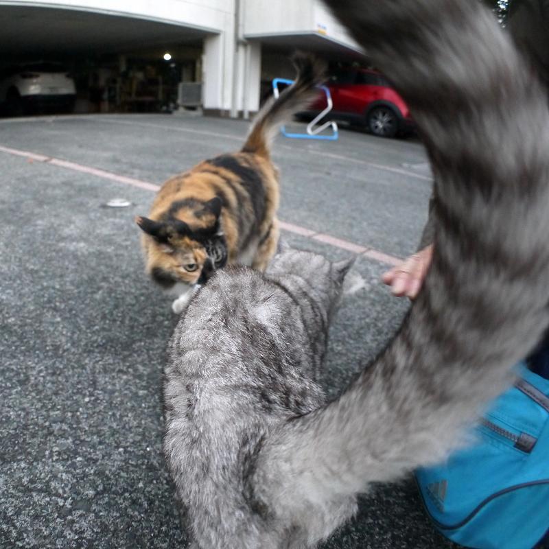 三毛猫と銀猫3