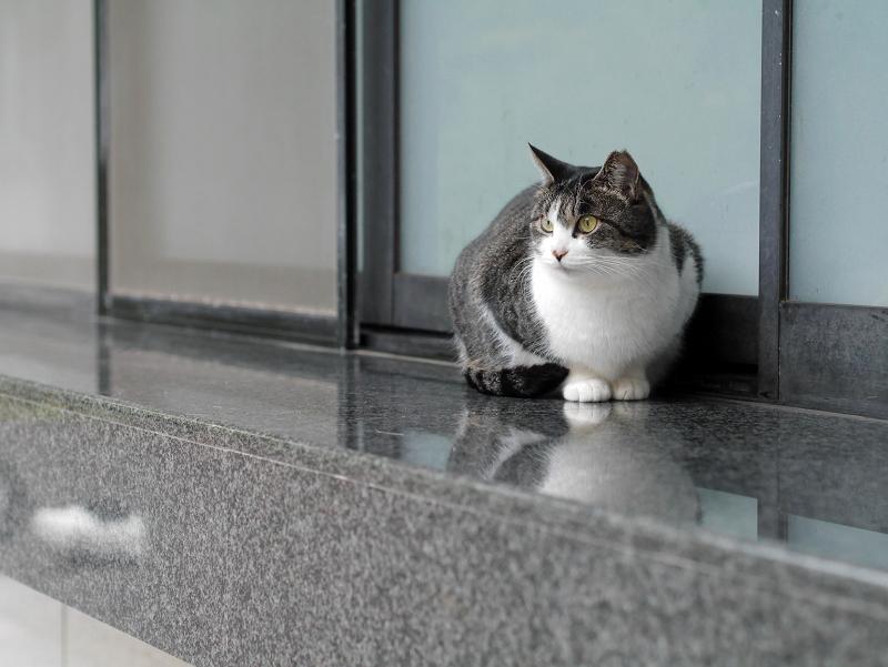 御影石の上のキジ白猫2