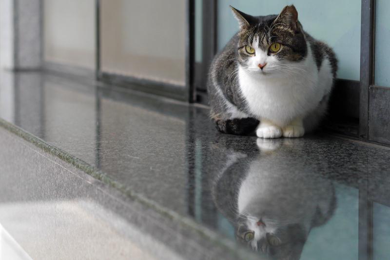 御影石の上のキジ白猫3